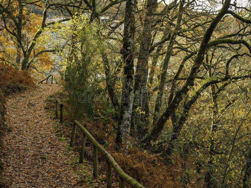 Bana av sidor i skogen royaltyfria bilder