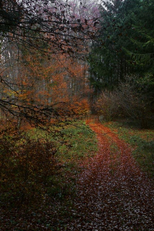 Bana in i den höstliga skogen royaltyfri foto