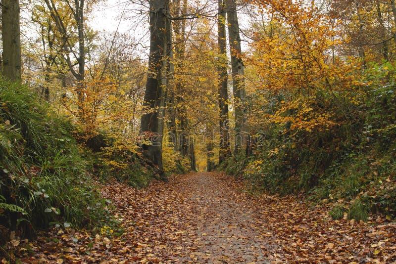 Bana i den Sonian skogen arkivfoto