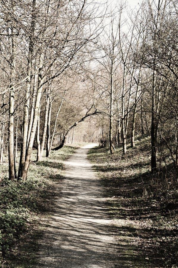 Bana i en skog med skuggor arkivbild