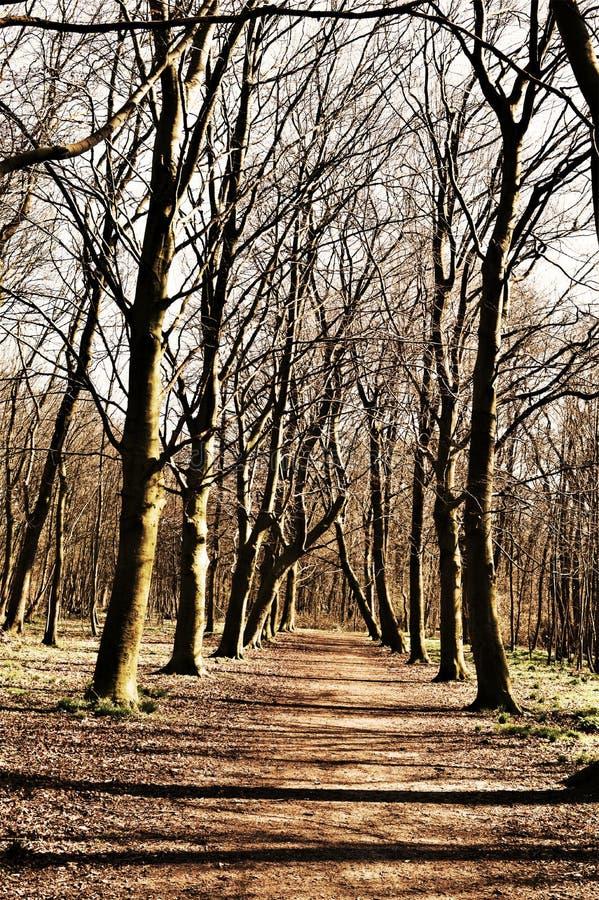 bana i en skog med trädskuggor royaltyfri fotografi
