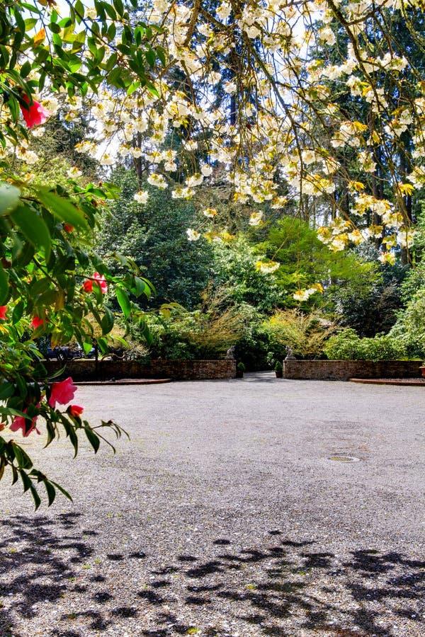 Bana i en trädgård, Sakura arkivbilder