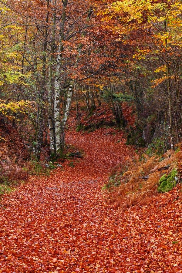 Bana i höstlig skog royaltyfria bilder