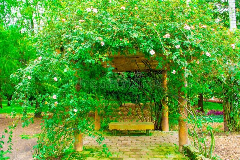 Bana i naturträdgården royaltyfri fotografi