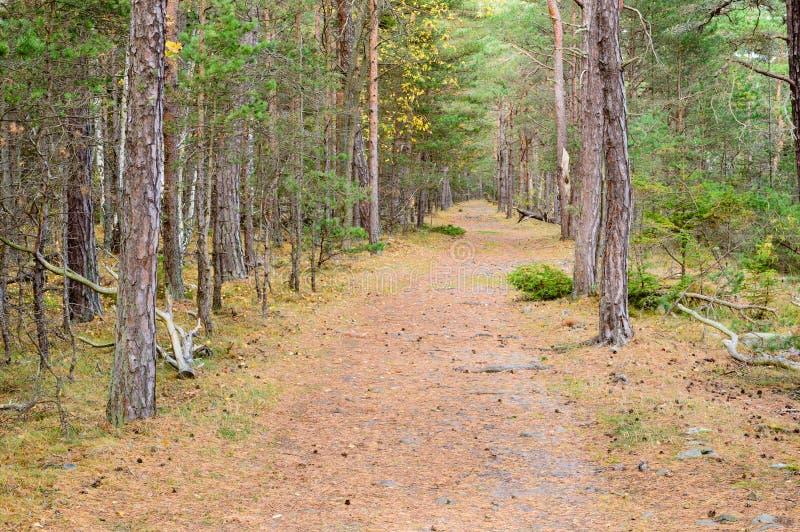 Bana i skog arkivbilder