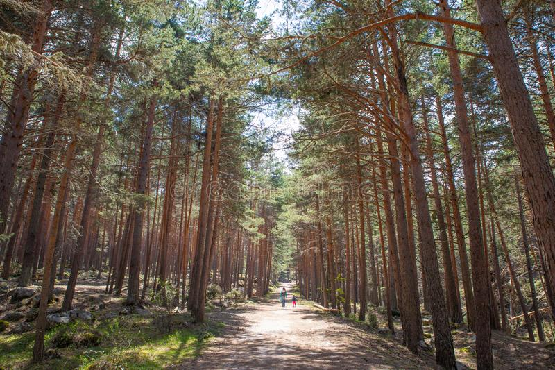 Bana i skog med att gå för liten flicka och för kvinna arkivfoton