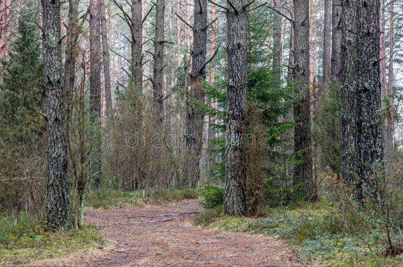 Bana i skog på nedgången arkivbild