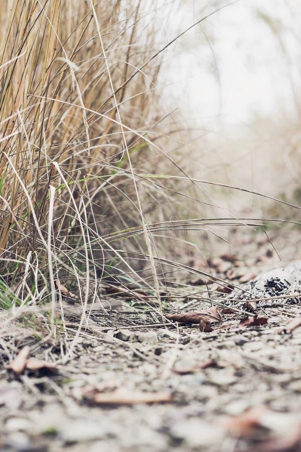 Bana i skogen bland långt torrt gräs arkivbild