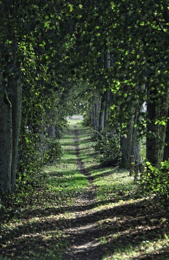 Bana i trevlig grön skog arkivbild