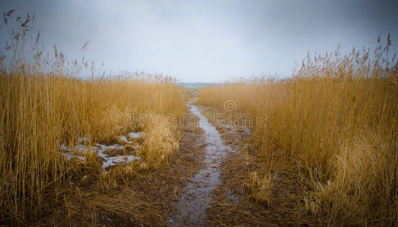 Bana in i våtmark med vasser fotografering för bildbyråer
