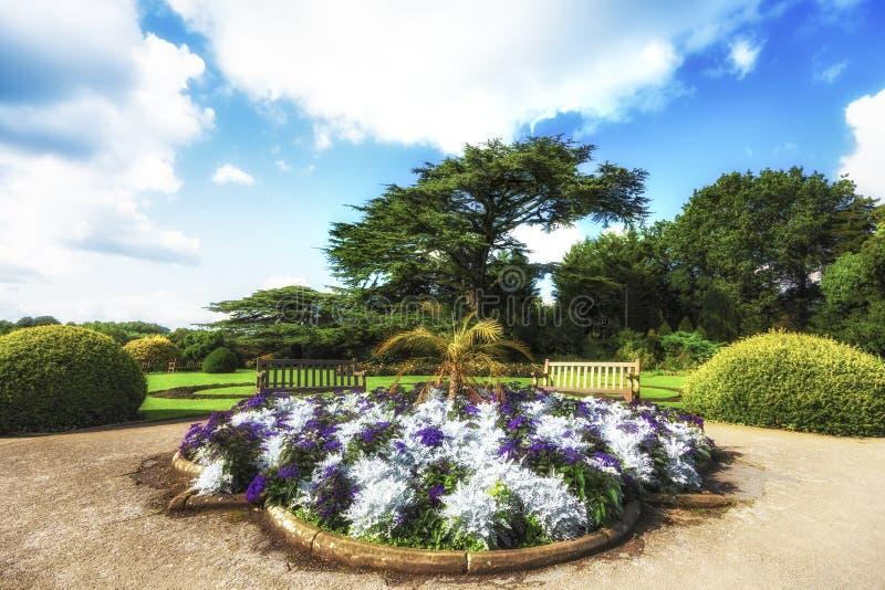 Bana längs träd i sommar med blå himmel royaltyfria foton