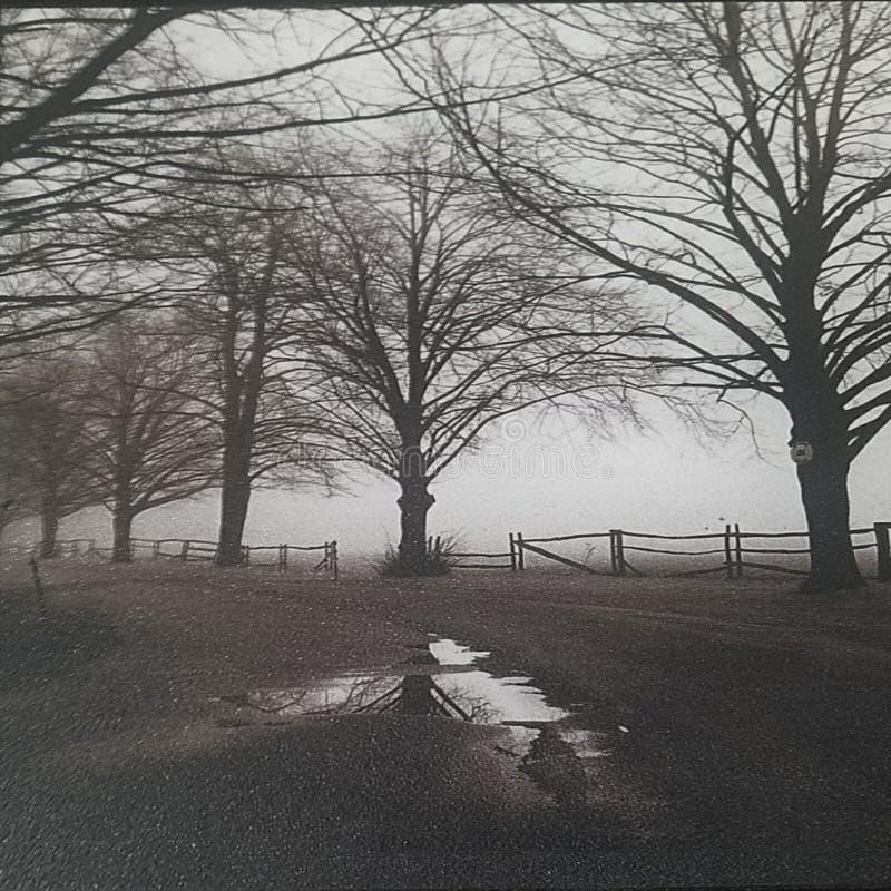 Bana med träd royaltyfri fotografi