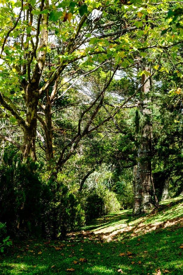 Bana med träd och gräsplansidor från buskar som badas av solen fotografering för bildbyråer