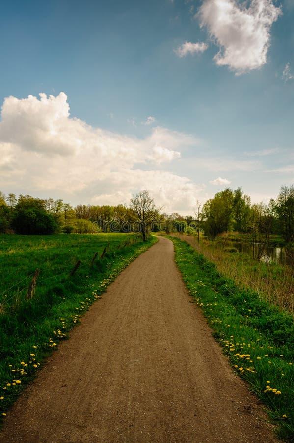 Bana mellan ängar och floden, med daisys på den soliga dagen fotografering för bildbyråer