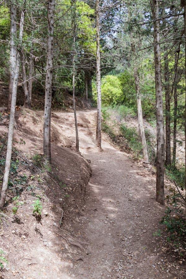 Bana mellan träd i nationalpark nära staden Nesher royaltyfri fotografi