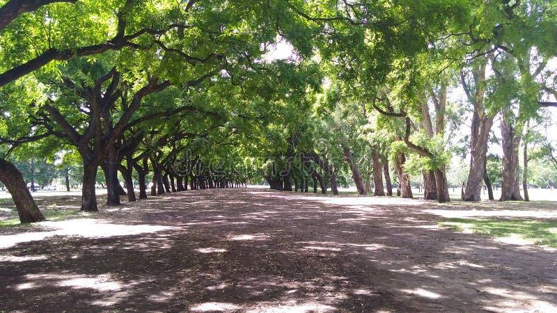 Bana mellan träden, Bosques de Palermo, Buenos Aires - Argen royaltyfri bild