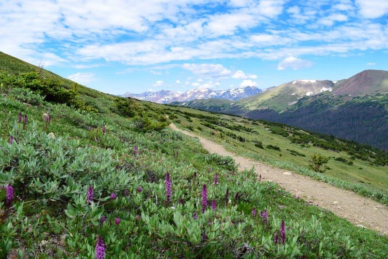 Bana in mot aldrig sommarbergen i Colorado royaltyfria bilder