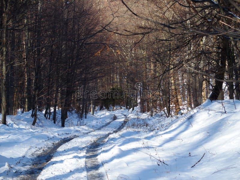Bana och spår i ensam träskog i Beskid berg arkivfoto