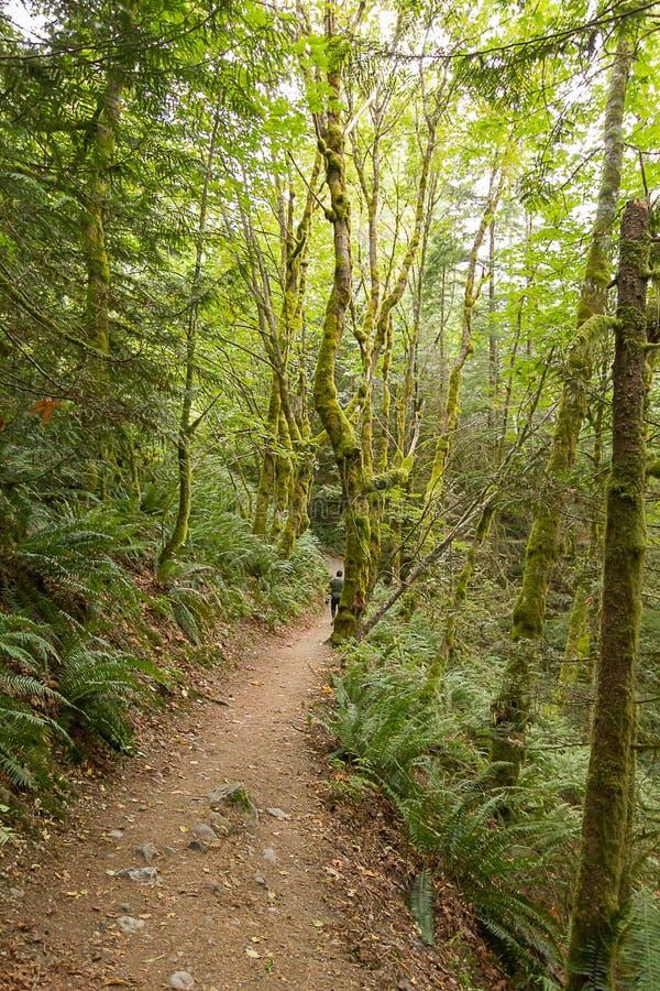 bana och träd som leder till och med undervegetation i sommar med fotgängaren i avstånd arkivfoton