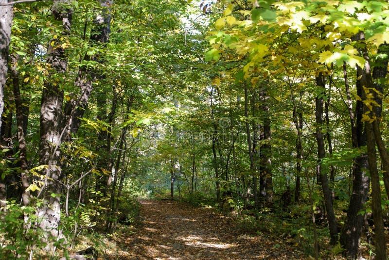 Bana som går till och med gräsplansidorna i en skog i sydliga Minnesota arkivfoto