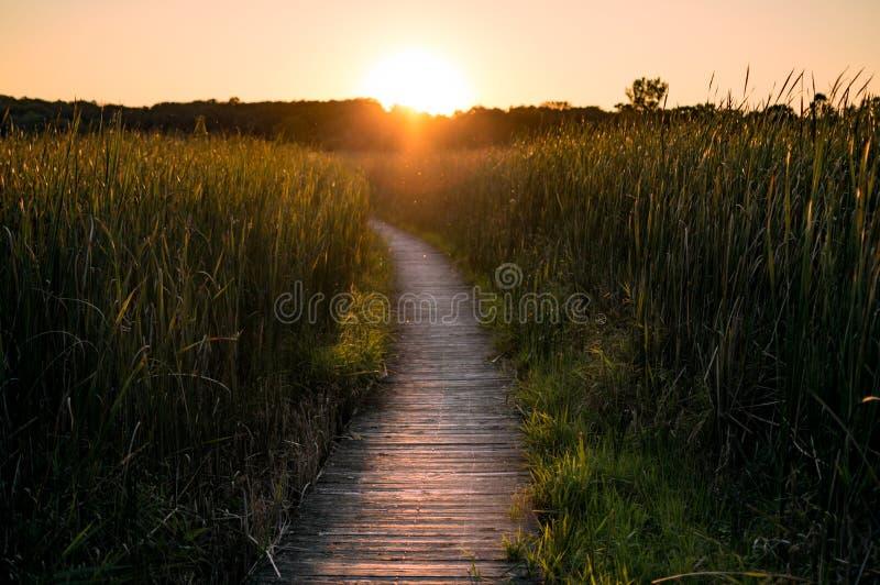 Bana som leder till och med myrlandskap på solnedgången arkivbilder