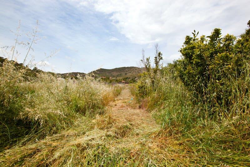 Bana som mejas till och med långt gräs, Valencia region, Spanien arkivbilder