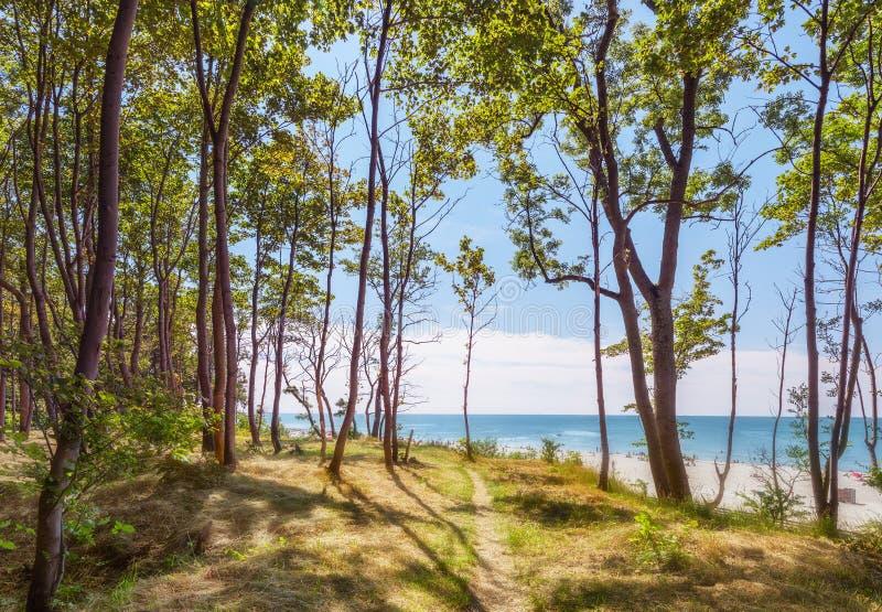 Bana till havet i parkera Yantarny Kaliningrad region Ryssland arkivfoto