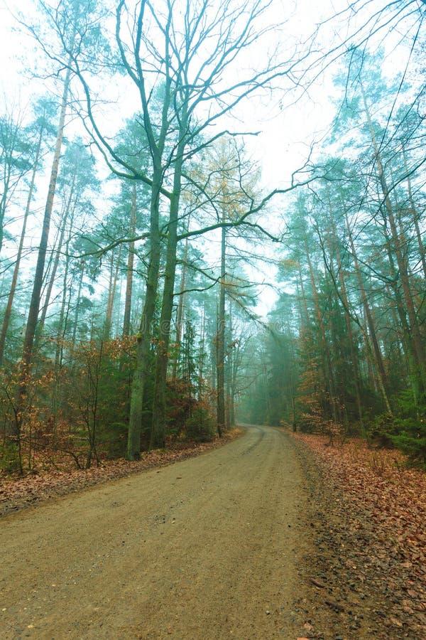 Bana till och med den dimmiga höstskogen fotografering för bildbyråer