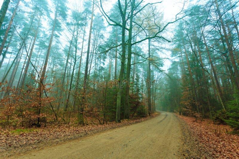 Bana till och med den dimmiga höstskogen royaltyfri fotografi