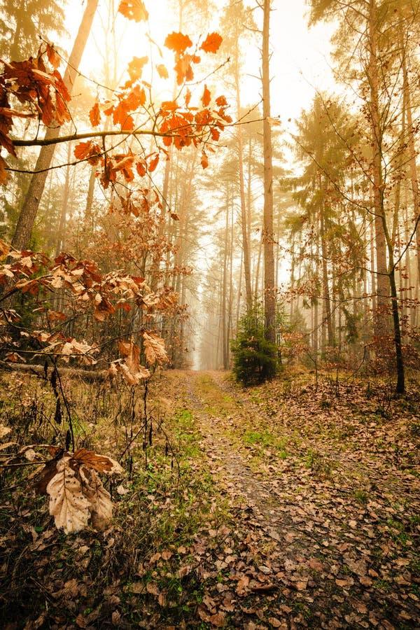Bana till och med den dimmiga höstskogen arkivbilder