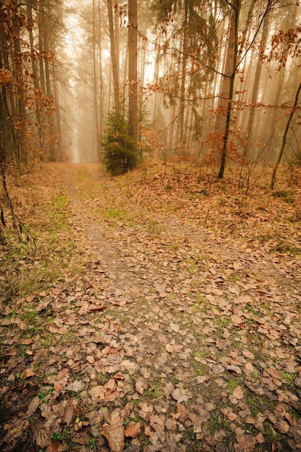 Bana till och med den dimmiga höstskogen arkivbild