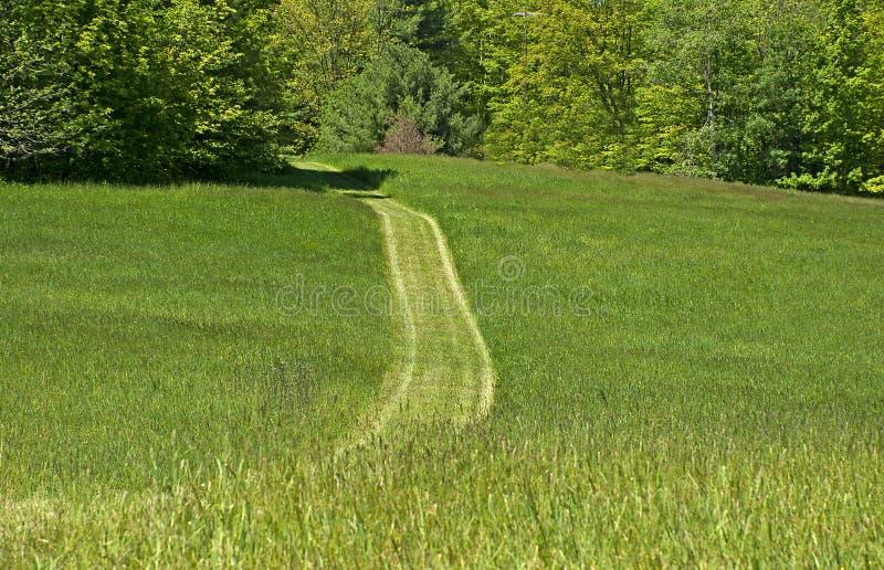 Bana till och med det gröna gräset royaltyfri bild