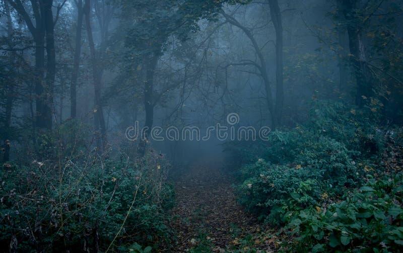 Bana till och med en mörk skog på natten royaltyfri foto
