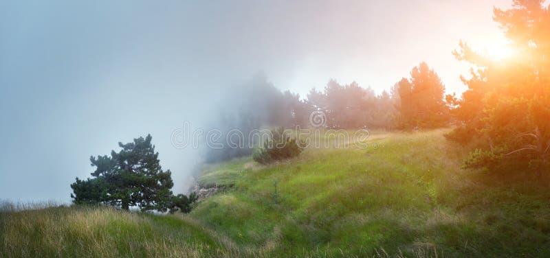 Bana till och med en mystisk mörk gammal skog i dimma royaltyfria foton