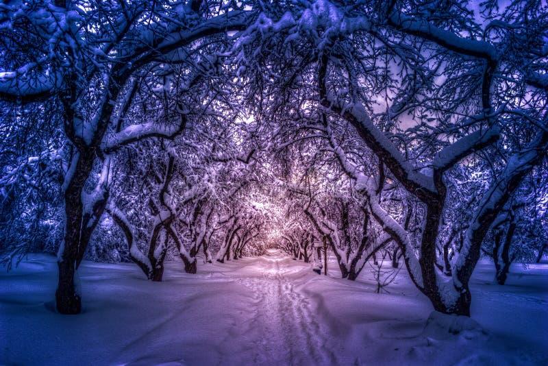 Bana till och med en skog med äppleträd och mist royaltyfri foto