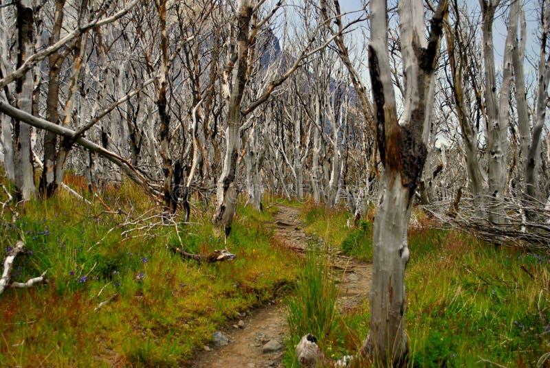 Bana till och med en torr skog arkivbilder