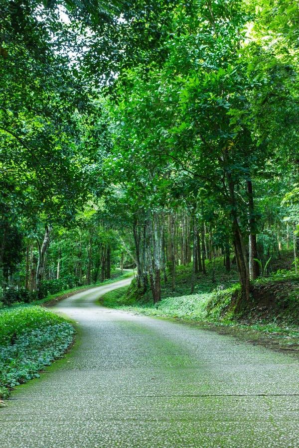 Bana till och med lös skog med mossig och grön folliage royaltyfri bild