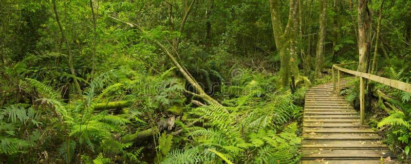 Bana till och med rainforest i den trädgårds- rutten NP, Sydafrika royaltyfria bilder