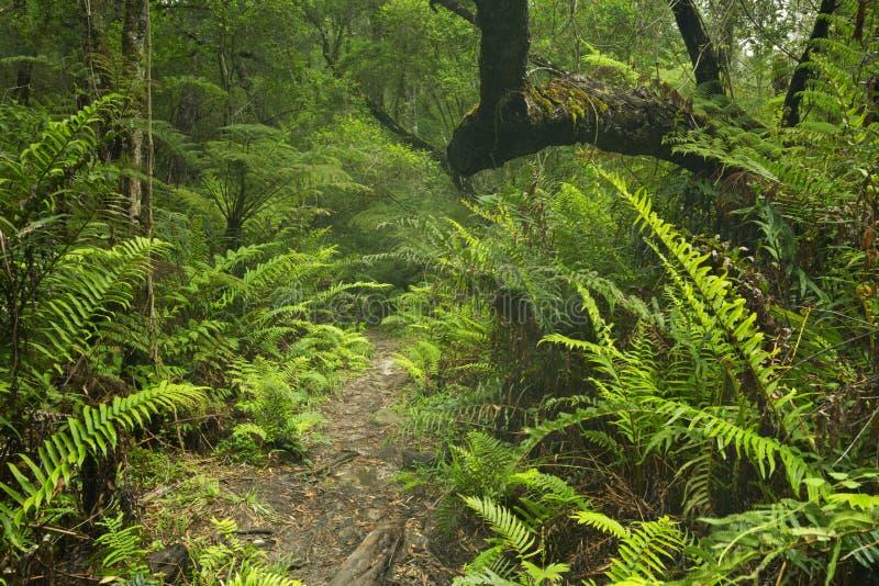 Bana till och med rainforest i den trädgårds- rutten NP, Sydafrika royaltyfri fotografi