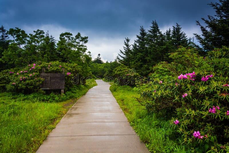 Bana till och med Roan Mountain Rhododendron Gardens, nära Carver royaltyfria foton