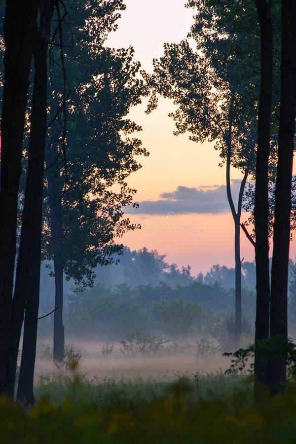 Bana till och med skog på ottan arkivfoton