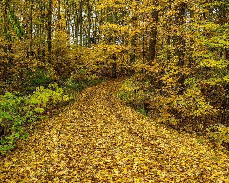 Bana till och med skogen i nedgång royaltyfri fotografi