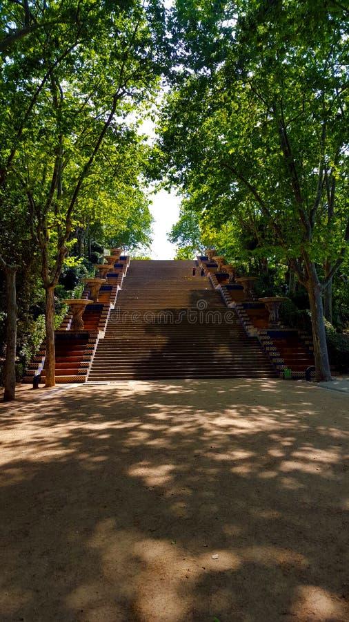 Bana till trappa mellan träden arkivbilder
