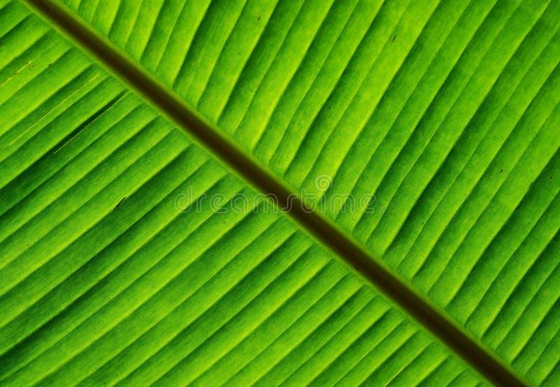 Banaan groen blad met textuur en patroon stock afbeeldingen