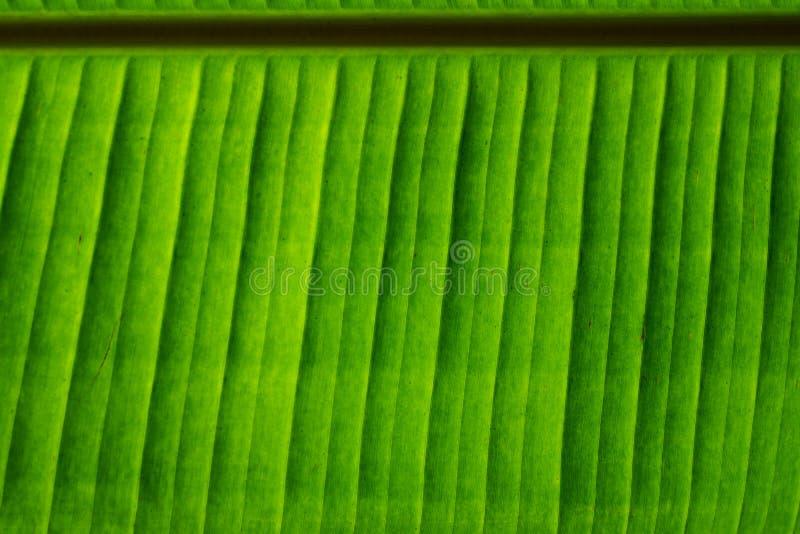 Banaan groen blad met textuur en patroon stock foto