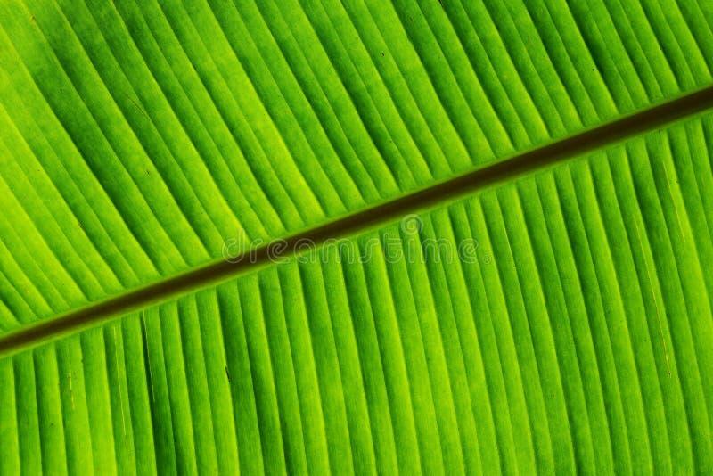 Banaan groen blad met textuur en patroon royalty-vrije stock afbeelding