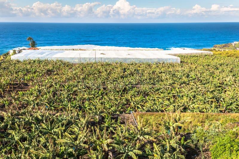 Banaanaanplanting op Canarische Eilanden Tenerife, Spanje stock foto's