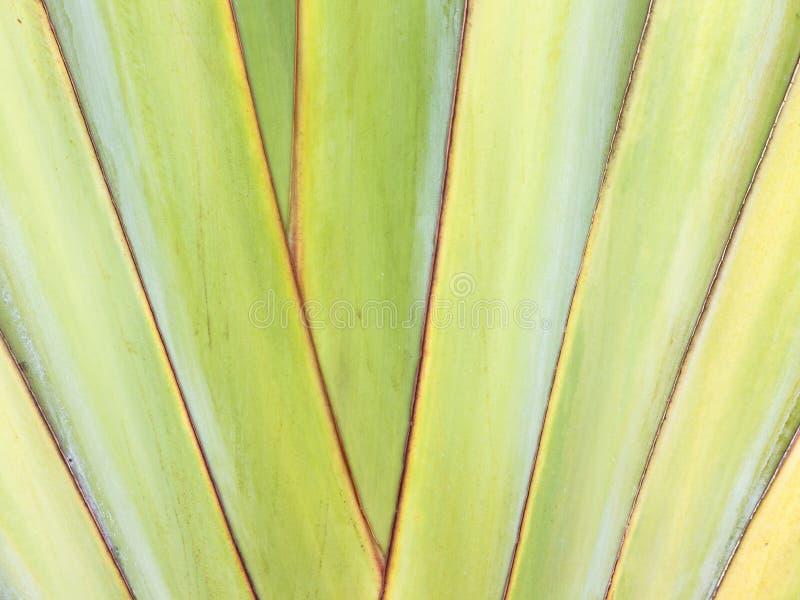 banaanblad royalty-vrije stock foto