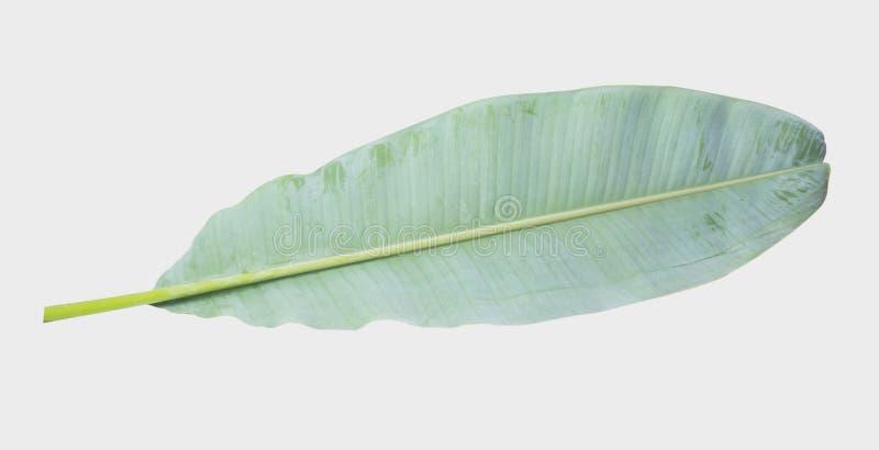 banaanblad Geïsoleerd op witte achtergrond met het knippen van weg stock afbeeldingen