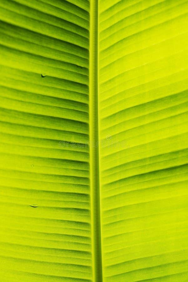 Banaanblad met patroon van aard stock afbeeldingen